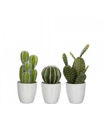 Trio de Cactus, plante en...