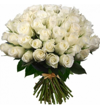 100 Roses Blanches